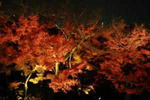 京都 清水寺 紅葉 見頃