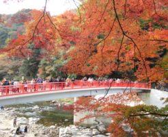 香嵐渓 紅葉 見ごろ