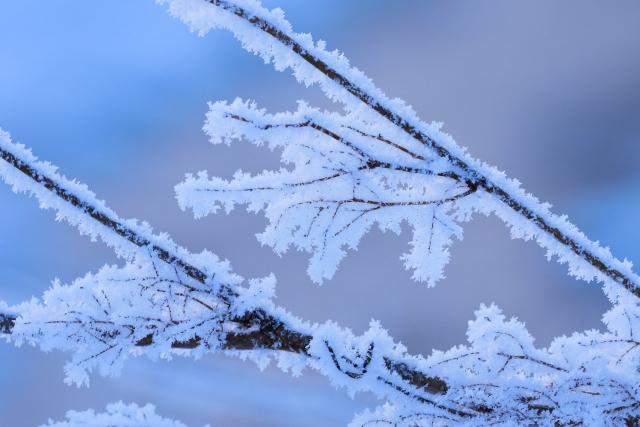 北海道 トマム 霧氷テラス