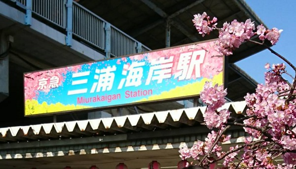 三浦海岸桜まつり アクセス