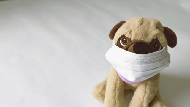 マスク まつげ カール 落ちる